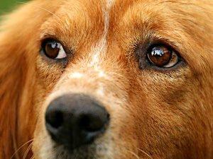 Tiergeschichten Hund im Zug