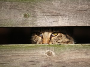 Tierkommunikation Katze