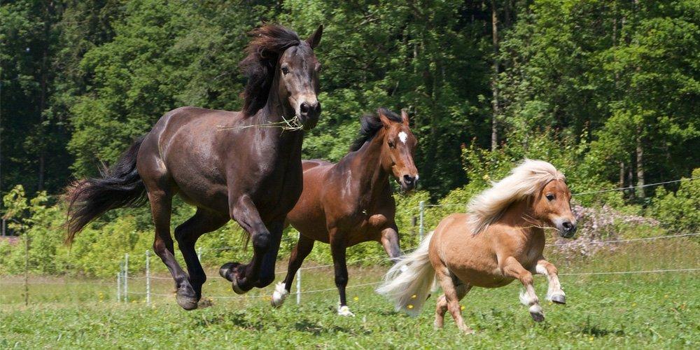 Tierkommunikation Pferde