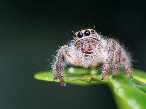 Tiergeschichten Spinne