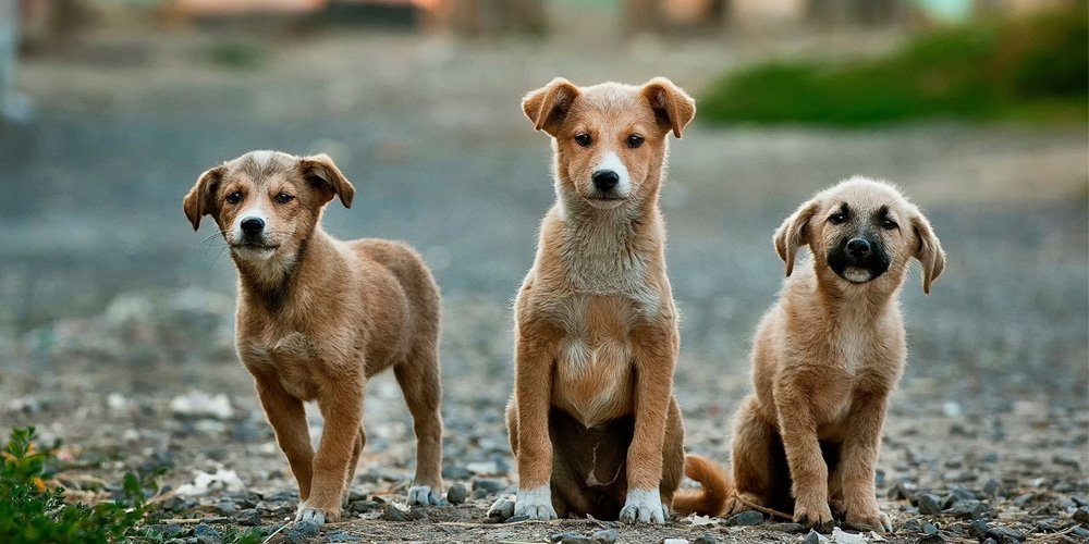 Tierkommunikation Hunde